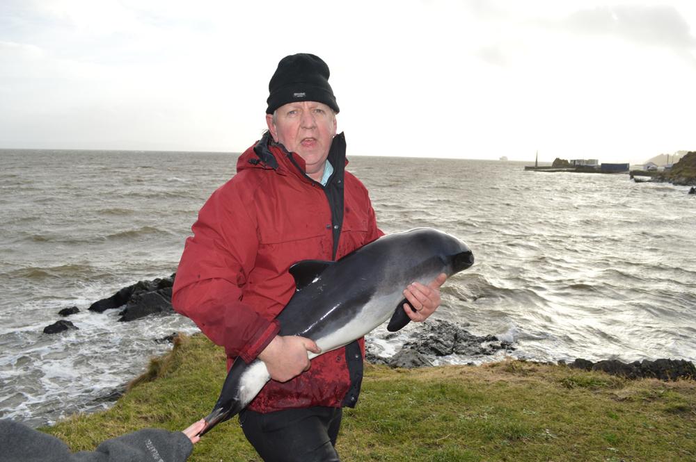 porpoise and anthony 4