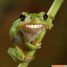 fit frog