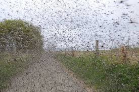 Midges Swarm in Moville
