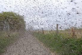 Midges Swarm in Moville